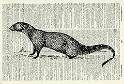 Mongoose ART PRINT - GIFT - Animal ART PRINT - VICTORIAN ART PRINT - Wildlife - VINTAGE ART - - Illustration - Picture - Vintage Dictionary Art Print - Wall Hanging - Home Décor - Book Print 66D