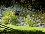 The Otonabee River - Art Print on Canvas (28x20 inches , unframed)