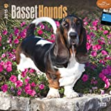 Basset Hounds 2015 Square 12x12 (Multilingual Edition)