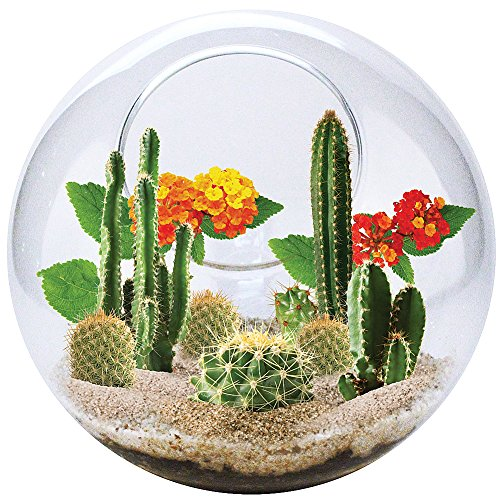 the-best-dunecraft-mini-desertscape-glass-terrarium