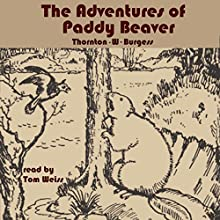 The Adventures of Paddy Beaver Audiobook by Thornton W Burgess Narrated by Tom S Weiss