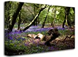 Bluebells Around Fallen Branches, Size: 32