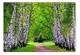 Startonight Canvas Wall Art Beautiful Alley Between the Trees, Nature USA Design for Home Decor, Dual View Surprise Artwork Modern Framed Ready to Hang Wall Art 31.5 X 47.2 Inch Original Art Painting!