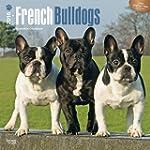 French Bulldogs 2016 - Franz�sische B...