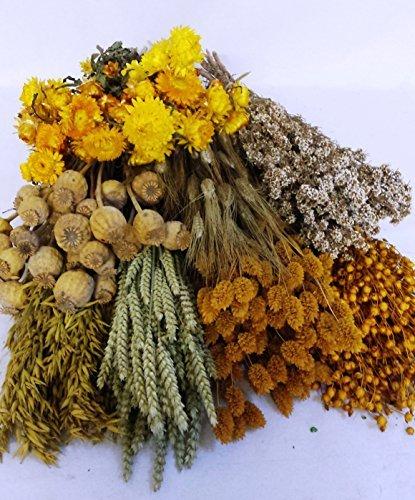 pack-flores-secas-amarillo-portes-gratis