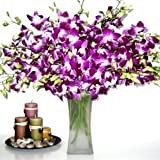 Fresh Flowers - 20 Premium Purple Dendrobium Orchids with Vase ~ Just Orchids