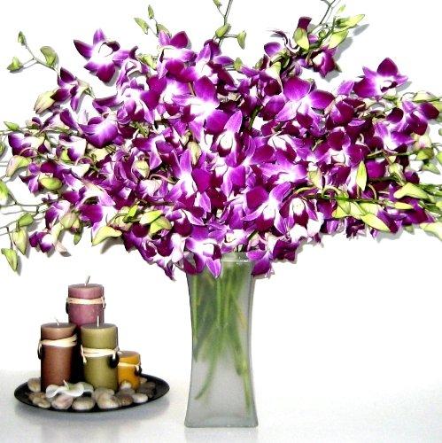 Fresh Flowers - 20 Premium Purple Dendrobium