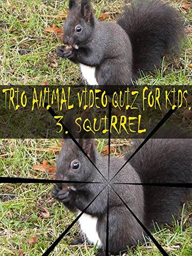 Trio Animal Video Quiz for Kids. 3. Squirrel