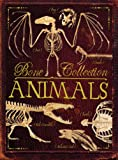 Bone Collection: Animals