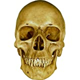 Life Size Model Human Skull Replica - Aged EARTH-BROWN Relic - Life Size Reproduction, Model 3093002 By Nose Desserts (Color: Earth Brown Antique)