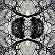 Sonic Mandala - Adam Rudolph & Go: Organic Orchestra