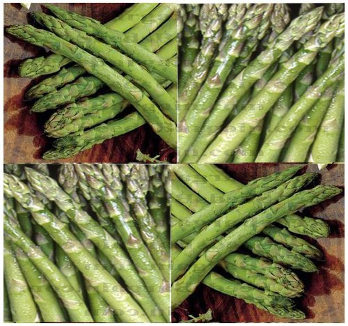 UC-72 ALL MALE ASPARAGUS seeds - HUGE SPEARS & Large Yield ~ A Mary Washington type asparagus (00100 Seeds - 100 Seeds - Pkt. Size)
