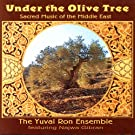 Under the Olive Tree