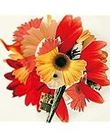 NHK「明日へ」東日本大震災復興支援ソング「花は咲く」コンピレーションアルバム  ハナハサク