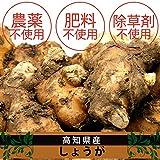 無農薬・無肥料 生姜 1kg