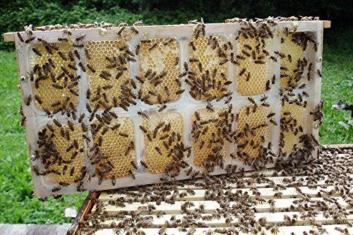 apibox-maxi-frame-honeycomb-honey-dadant-langstroth