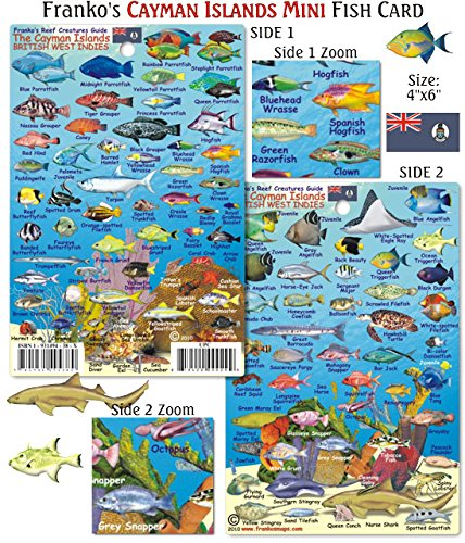 mini-cayman-islands-reef-creatures-fish-id-for-scuba-divers-and-snorkelers