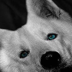 Wellcoda   White Husky Dog Puppy Womens Animal Fun Black Sweatshirt S-2XL