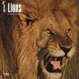 Lions 18-Month 2014 Calendar (Multilingual Edition)