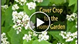 The Benefits of Having a Cover Crop for the Home Garden