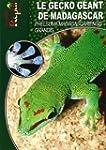 Le Gecko G�ant de Madagascar: Phelsum...