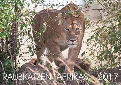 raubkatzen-afrikas-wandkalender-2017-din-a3-quer-faszinierende-aufnahmen-von-afrikas-grosskatzen-low