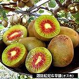 本日の販売果樹「道の駅もてぎ」、9月21日(水)
