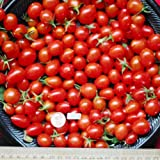 SWEET GRAPE TOMATOES FRESH VEGETABLE FRUIT PRODUCE PER PINT
