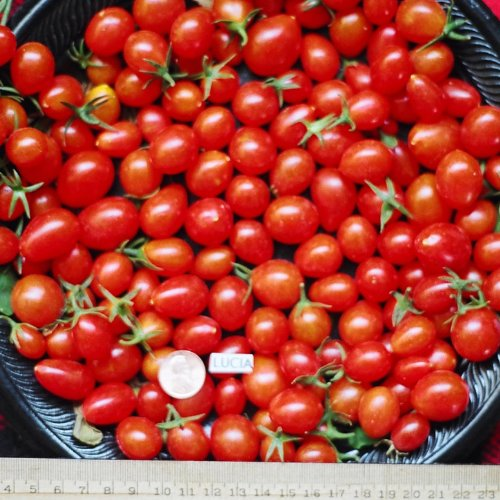Sweet Grape Tomatoes Fresh Vegetable Fruit Produce Per Pint