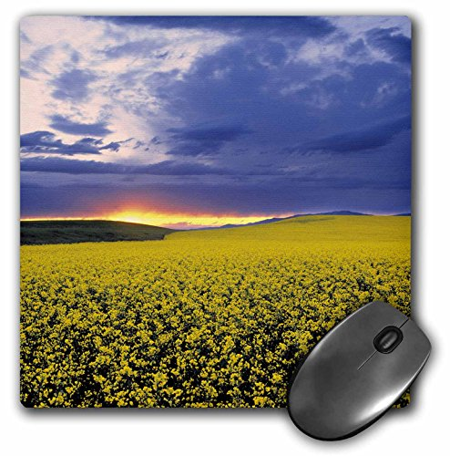 Danita Delimont - Agriculture - Idaho, Swan Valley, Field of canola, agriculture - US13 RER0000 - Ric Ergenbright - MousePad (mp_90126_1)