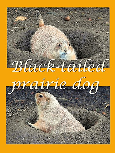 Black-tailed prairie dog on Amazon Prime Instant Video UK