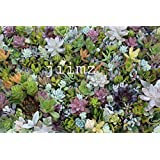 28 Varieties Succulent Cuttings Great for Vertical Gardens & Wreaths & Topiaries