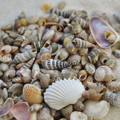 Miniature Fairy Garden Tiny Seashells