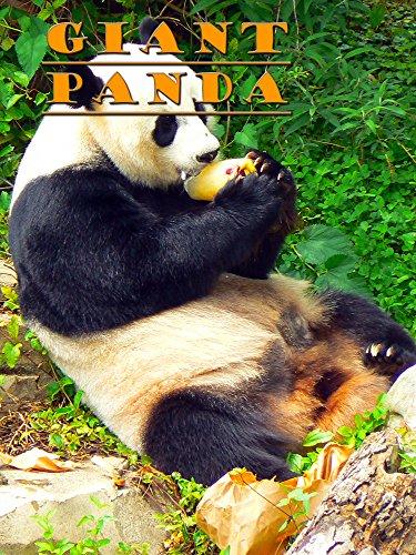 Clip: Giant Panda