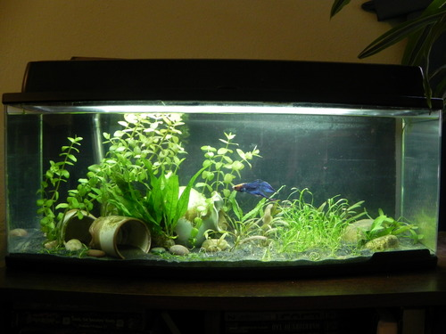 See all 20 customer images for Petco fish tank filters