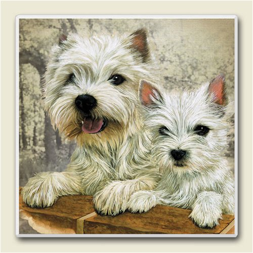AbsorbaStone Coaster set~ West Highland Terrier ~4 Tile Drink Coasters ~ code...
