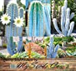 ~ BULK ~ Pilosocereus BLUE RARE Cactus Mix - CACTUS Seeds GORGEOUS BLUE - COLLECTOR DREAM Perfect For Greenhouse Or As House Plants (0030 Seeds - 30 Seeds)