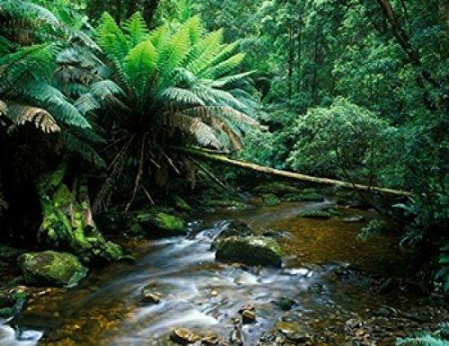 rob-tilley-danitadelimont-nelson-creek-franklin-gordon-wild-rivers-national-park-tasmania-australia-