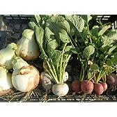 無農薬EM循環農法 朝取り夏野菜セット(玉ねぎ、かぼちゃ、なすび、おまけ)大阪産※クール便込
