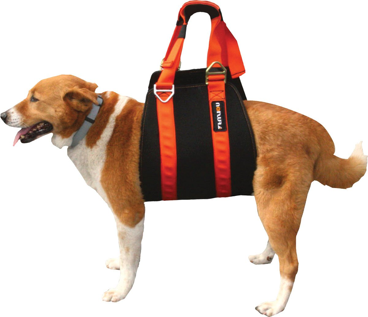 mesh dog harness with handle  mesh  get free image about