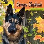 German Shepherds  2016 Wall Calendar