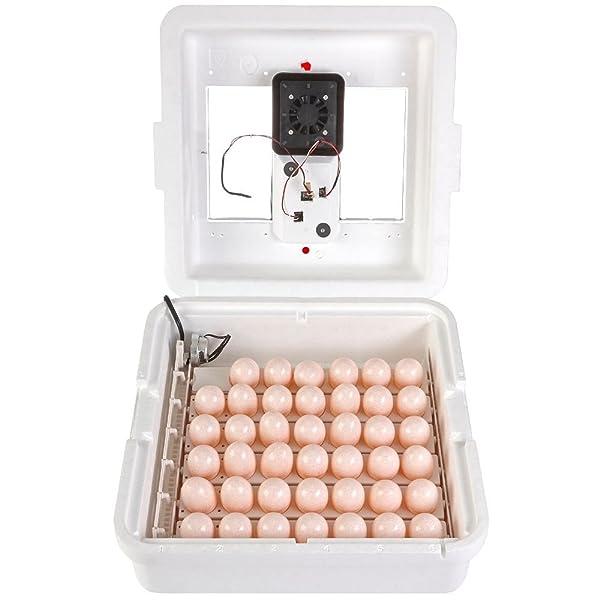 LITTLE GIANT Deluxe Incubator w/Egg Turner