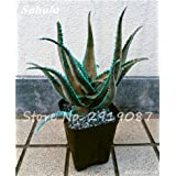 New! 20 Pcs Colorful Cactus Rebutia Variety Mix Exotic Aloe Seed Cacti Rare Cactus Office Edible Beauty Succulent Bonsai Plant 5 (Color: 5, Tamaño: Show In Picture)
