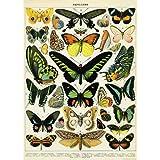 (20x28) Natural History Butterflies Decorative Decoupage Vintage Style Paper Poster Print