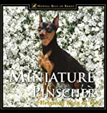 img - for The Miniature Pinscher: Reigning King of Toys by Jacklyn Hungerland (2000-06-01) book / textbook / text book