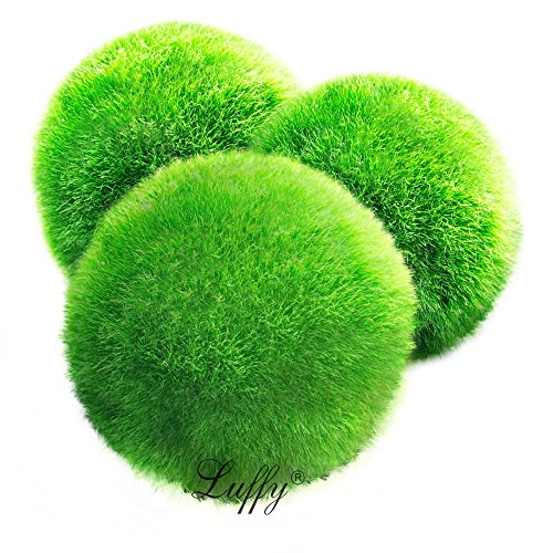 3 LUFFY Giant Marimo Moss Balls