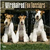 BrownTrout Wirehaired Fox Terriers 2014 Wall