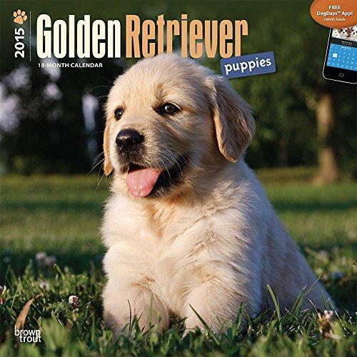 Golden Retriever Puppies 2015 Wall Calendar
