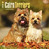 Inc Browntrout Publishers Cairn Terriers 2016 Square 12x12