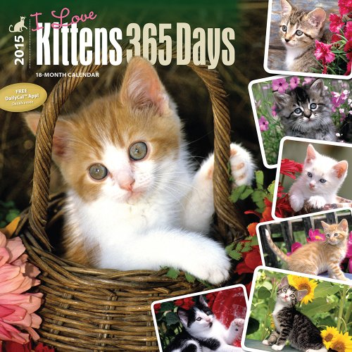 Kittens, I Love, 365 Days, 2015 Wall